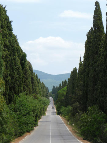 Bolgheri-Viale-Cipressi