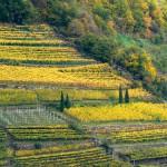 Dalla Val Venosta, vini dal carattere unico.