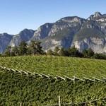 Nasce il Consorzio Vignaioli del Trentino