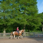 On horseback to New York city