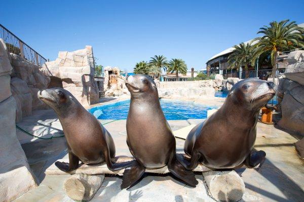 Marineland-foche