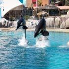 Con le orche di Marineland