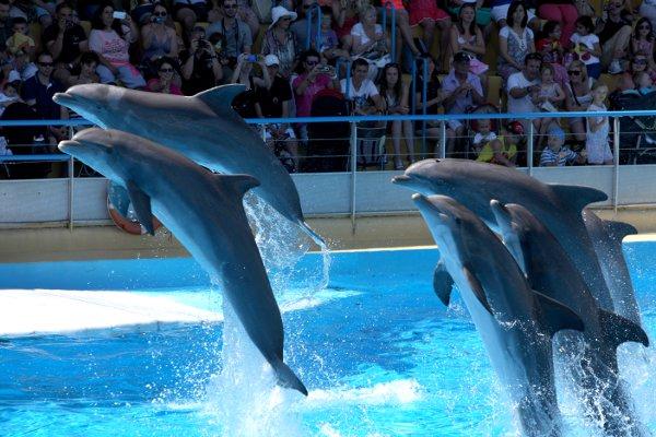 Marineland-spettacolo-delfini