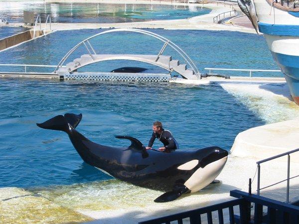Marineland-spettacolo-orche