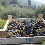Modello Masi. Quattro vini espressione delle Venezie