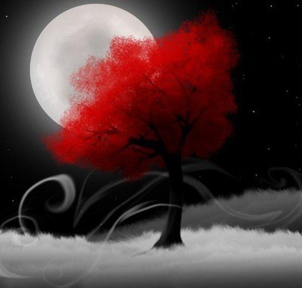 luna-alberorosso