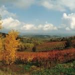 Vinarius. Winner i Paesaggi del Collio, terroir di bianchi