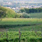 Asolo Wine Tasting, a maggio la sesta edizione
