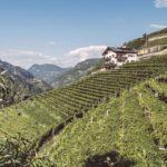 Sylvaner vino principe della Val Isarco per Il Gambero Rosso