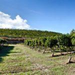 Monte Zovo a Caprino Veronese si converte al biologico