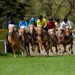 Cavalli Haflinger, a Merano tornano le corse tradizionali