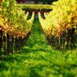 Baron Di Pauli, il vino come memoria evolutiva il terroir come identità