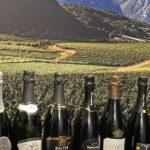 Trentino & Wine, lo storytelling nel calice, l'evoluzione nel format