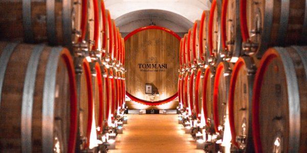 Tommasi Family Estates, l'autenticità indossa il wine sentiment