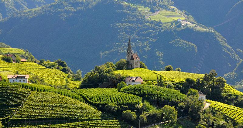 Consorzio Vini Alto Adige riduce la resa