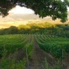 Top 100 Wine Spectator, un italiano sul podio