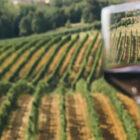 Wine Valpolicella Enoturismo