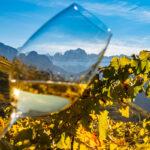 Wine Erste+Neue  immagine alpina