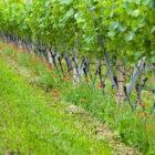 Clessidra Private consolida e rilancia nel vino