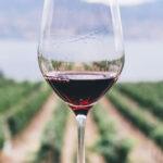 Washington Wine, i produttori diversificano